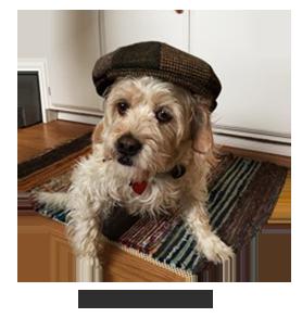 Watson Dog